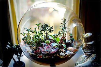 Terrarium by Paula Hayes by Nazmiyal