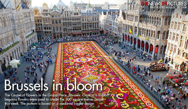 Brussels Biennial Flower Carpet Nazmiyal