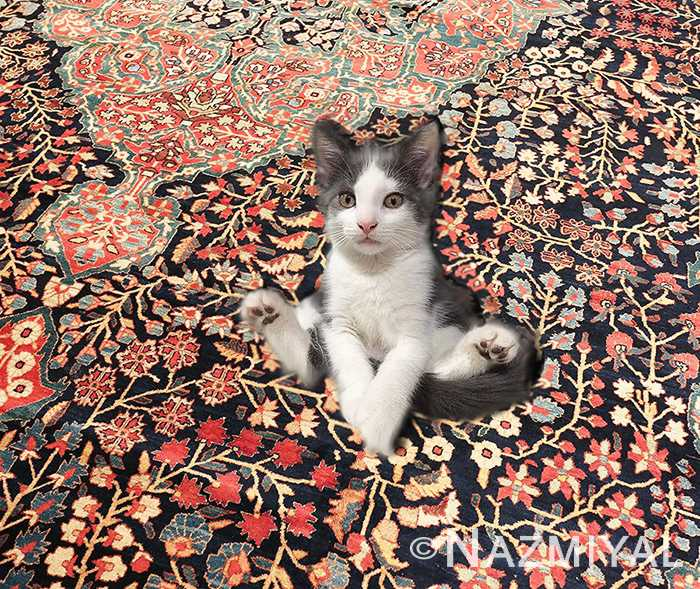 Cute Little Happy Kitten Sitting On A Clean Rug by nazmiyal